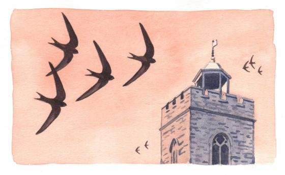 wivswifts