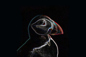 Digital Puffin